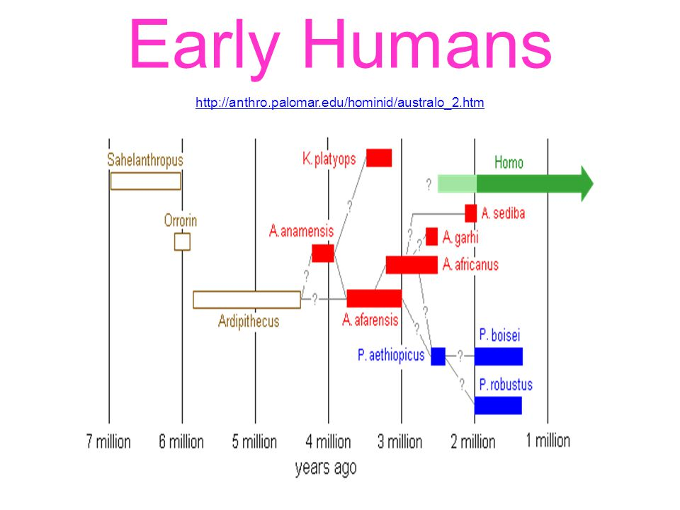 Early Humans http://anthro.palomar.edu/hominid/australo_2.htm