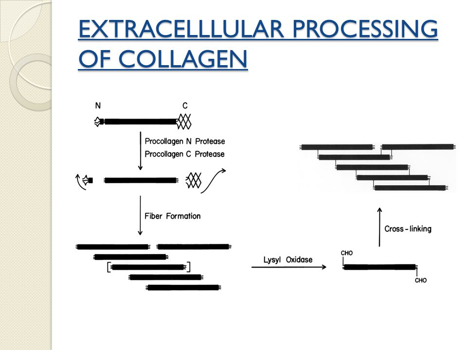 EXTRACELLLULAR PROCESSING OF COLLAGEN