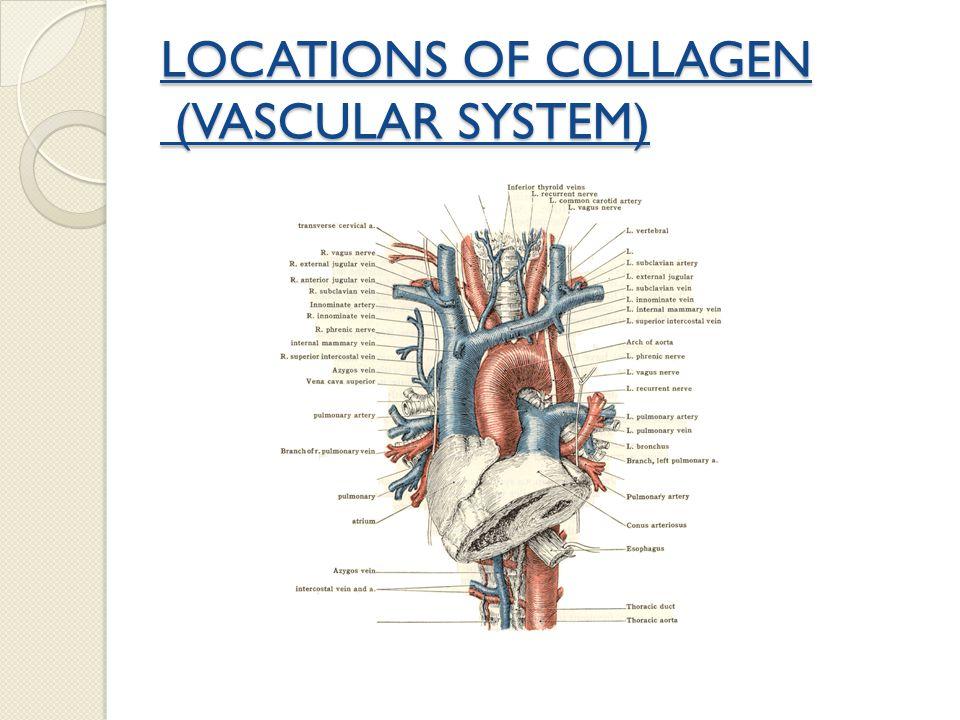 LOCATIONS OF COLLAGENS BONES TEETH CARTILAGE