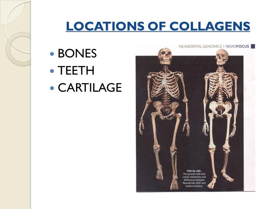 Collagen – A Triple Helix The secrets of its a.a.composition...