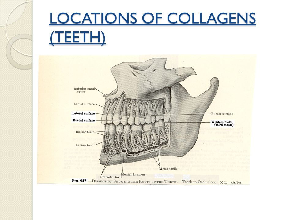 LOCATIONS OF COLLAGENS (EYE)