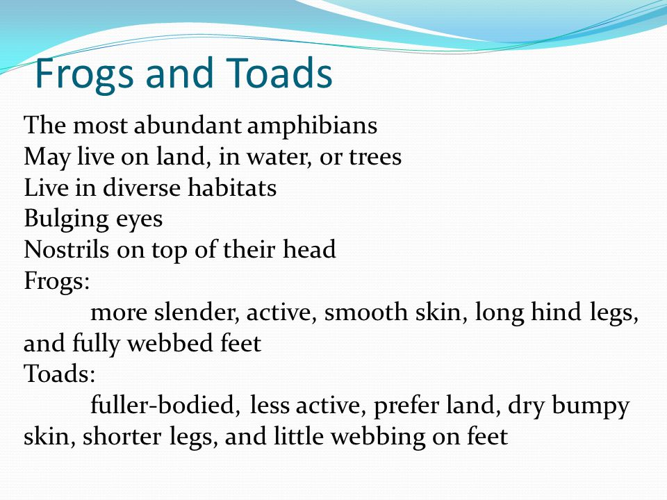 Amphibian Characteristics Like fish, they are bioindicators.