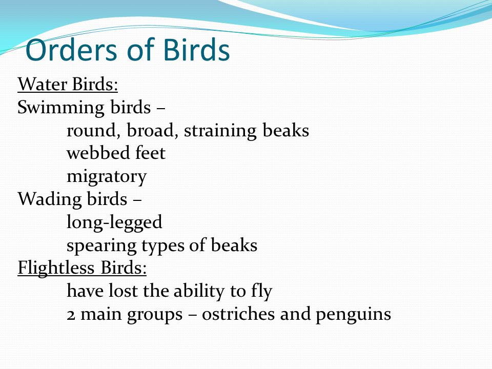 Orders of Birds Orders of birds: Perching : tree dwellers perching foot has 3 toes pointing forward and 1 toe backwards EX: cardinal, robin, bluebird, and swallows Non-perching land birds: feed on seeds and fruit.