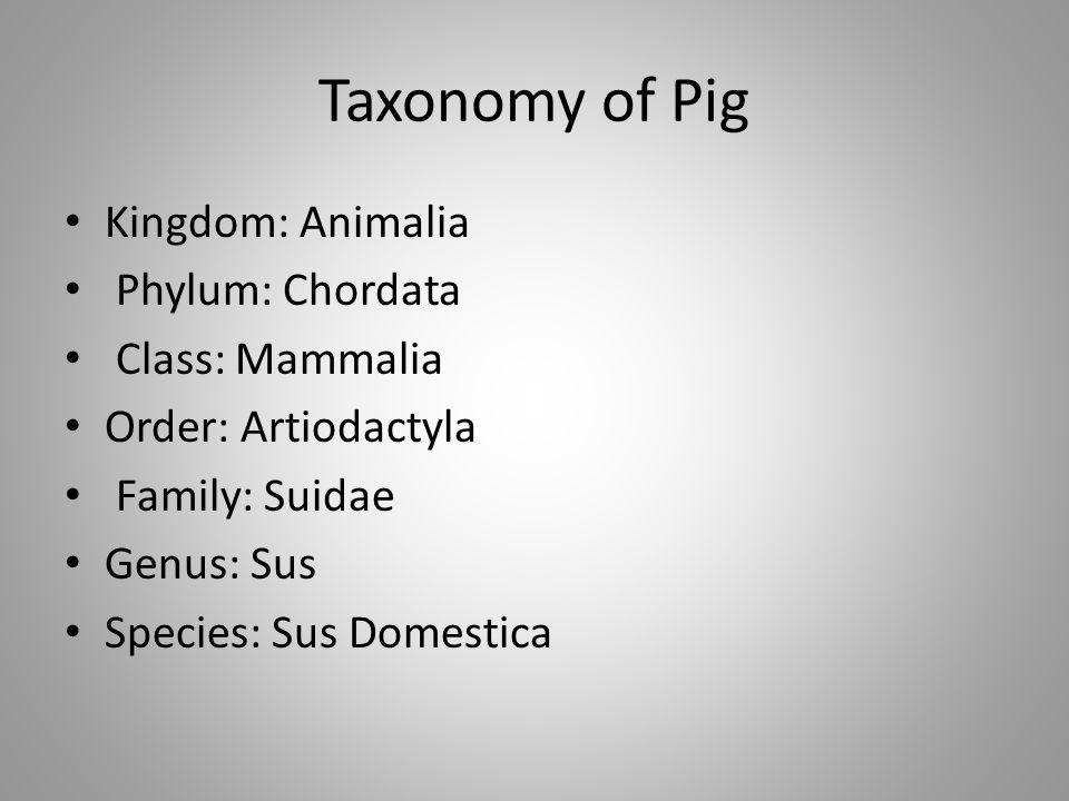 Taxonomy of Pig Kingdom: Animalia Phylum: Chordata Class: Mammalia Order: Artiodactyla Family: Suidae Genus: Sus Species: Sus Domestica