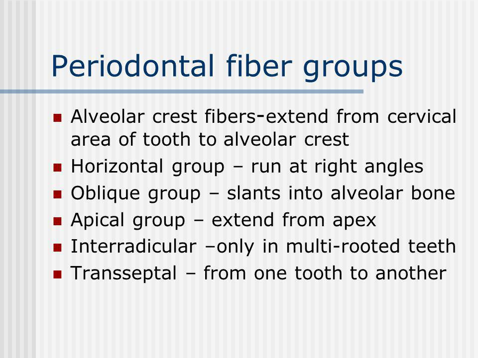 Periodontal fiber groups Alveolar crest fibers - extend from cervical area of tooth to alveolar crest Horizontal group – run at right angles Oblique group – slants into alveolar bone Apical group – extend from apex Interradicular –only in multi-rooted teeth Transseptal – from one tooth to another