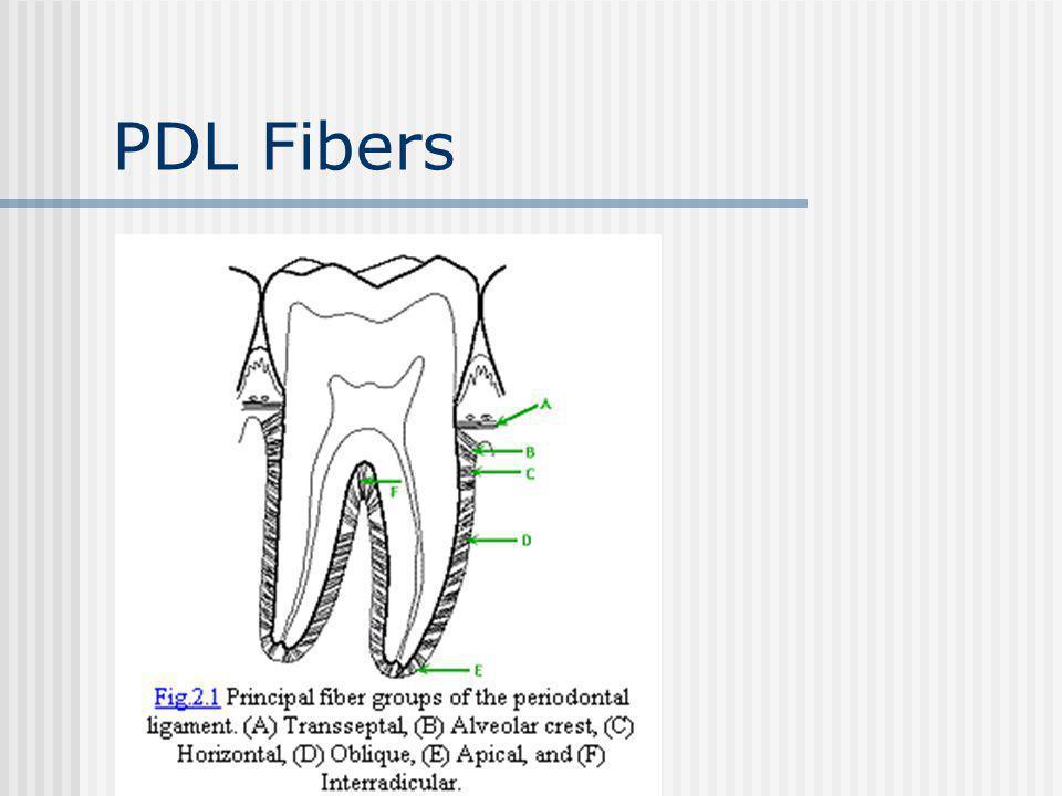 PDL Fibers