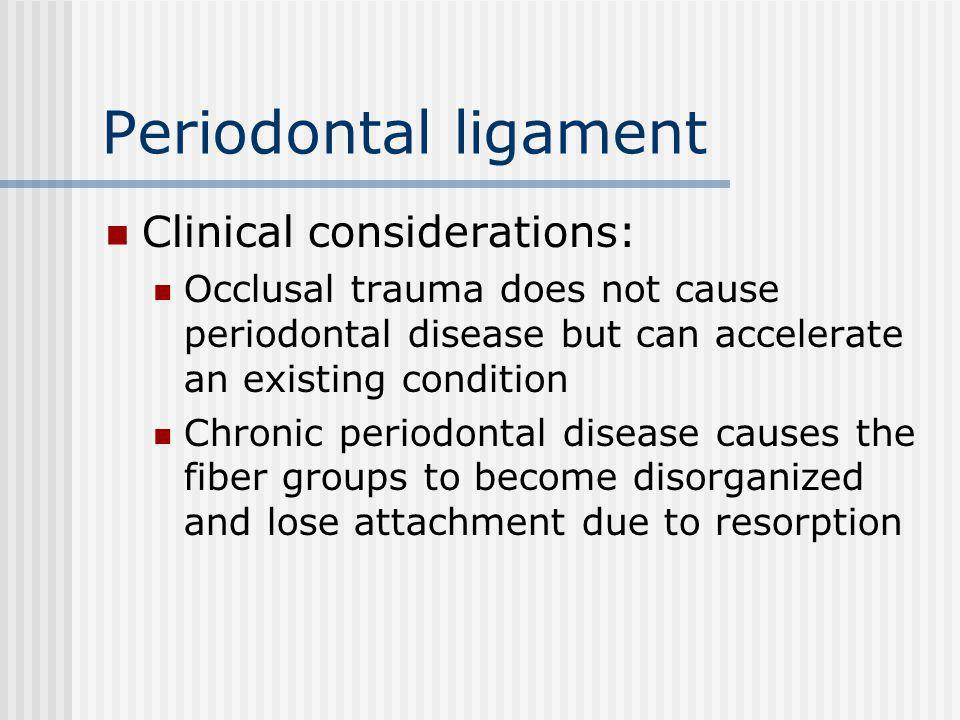 Periodontal ligament Clinical considerations: Occlusal trauma does not cause periodontal disease but can accelerate an existing condition Chronic periodontal disease causes the fiber groups to become disorganized and lose attachment due to resorption