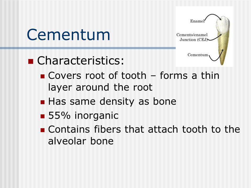 Characteristics: Covers root of tooth – forms a thin layer around the root Has same density as bone 55% inorganic Contains fibers that attach tooth to the alveolar bone