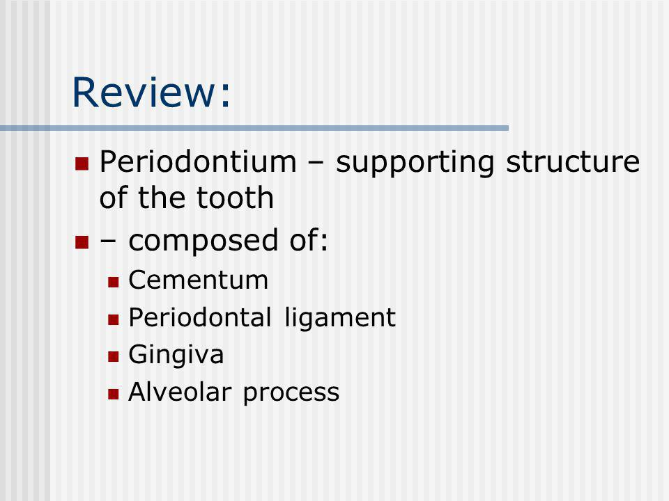 Review: Periodontium – supporting structure of the tooth – composed of: Cementum Periodontal ligament Gingiva Alveolar process