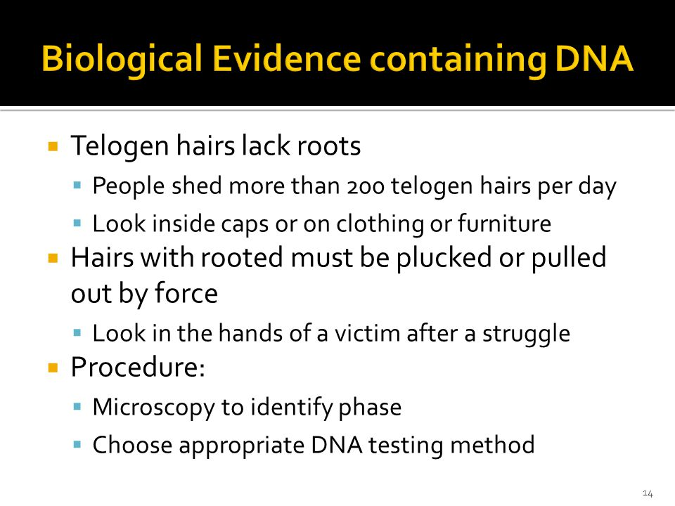 14 Telogen hairs lack roots People shed more than 200 telogen hairs per day Look inside caps or on clothing or furniture Hairs with rooted must be plucked or pulled out by force Look in the hands of a victim after a struggle Procedure: Microscopy to identify phase Choose appropriate DNA testing method