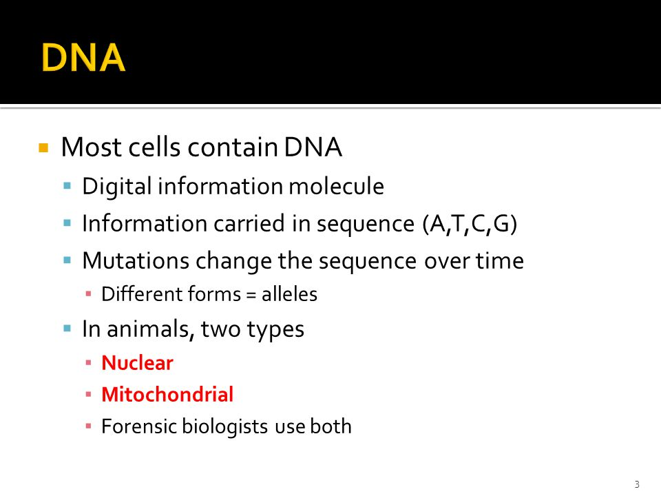 Most cells contain DNA Digital information molecule Information carried in sequence (A,T,C,G) Mutations change the sequence over time Different forms = alleles In animals, two types Nuclear Mitochondrial Forensic biologists use both 3
