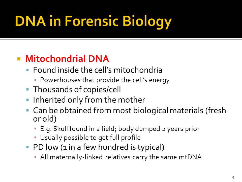 Mitochondrial DNA Found inside the cells mitochondria Powerhouses that provide the cells energy Thousands of copies/cell Inherited only from the mothe