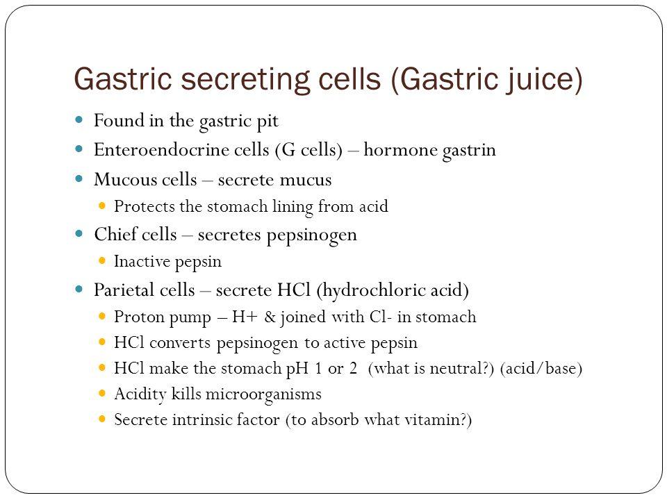 Gastric secreting cells (Gastric juice) Found in the gastric pit Enteroendocrine cells (G cells) – hormone gastrin Mucous cells – secrete mucus Protec