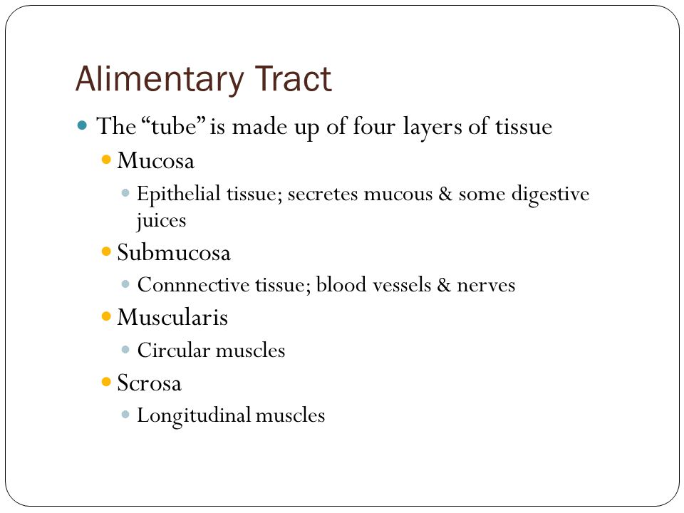 Alimentary Tract The tube is made up of four layers of tissue Mucosa Epithelial tissue; secretes mucous & some digestive juices Submucosa Connnective