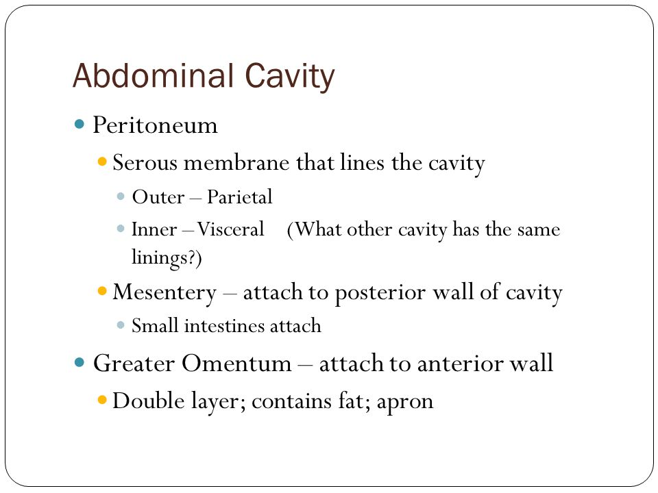Abdominal Cavity Peritoneum Serous membrane that lines the cavity Outer – Parietal Inner – Visceral (What other cavity has the same linings?) Mesenter