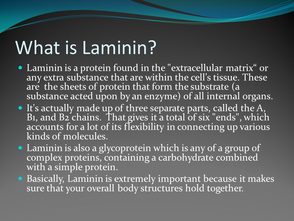 What is Laminin.