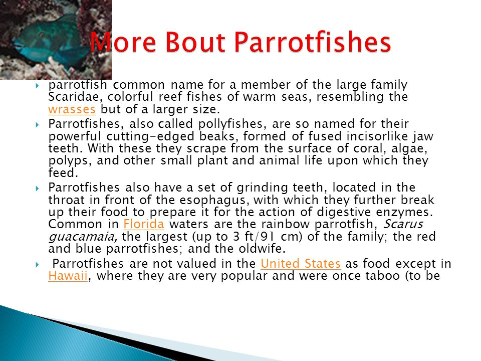 Rainbow Parrotfish Scientific Name: Scarus guacamaia Category: Parrotfishes Size: 1.5 to 5 ft.