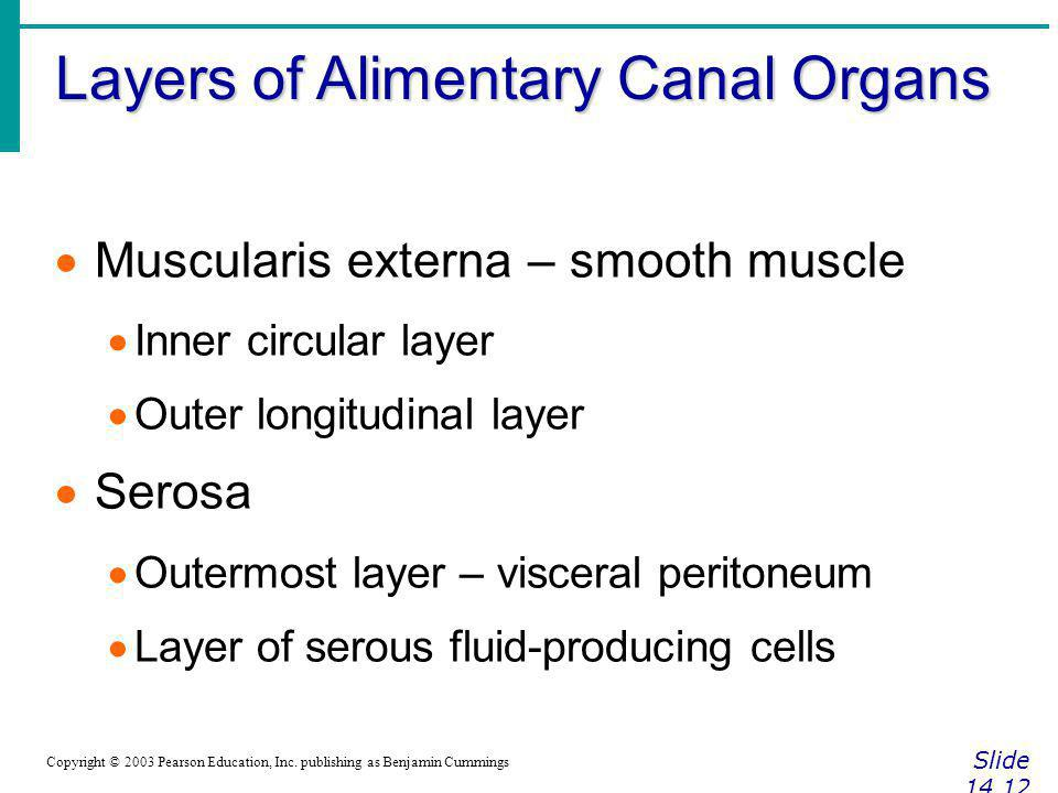 Layers of Alimentary Canal Organs Slide 14.12 Copyright © 2003 Pearson Education, Inc. publishing as Benjamin Cummings Muscularis externa – smooth mus