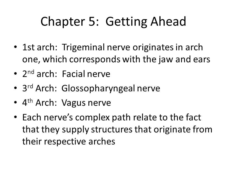Chapter 5: Getting Ahead 1st arch: Trigeminal nerve originates in arch one, which corresponds with the jaw and ears 2 nd arch: Facial nerve 3 rd Arch: Glossopharyngeal nerve 4 th Arch: Vagus nerve Each nerves complex path relate to the fact that they supply structures that originate from their respective arches