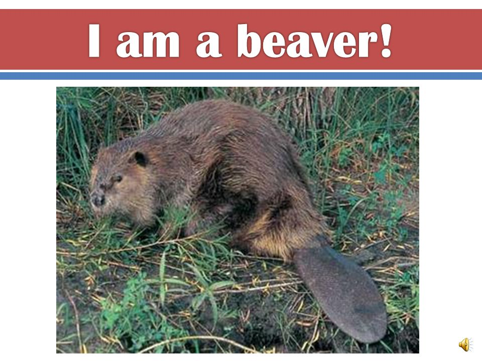 I am a mammal because I have fur and I am warm-blooded.