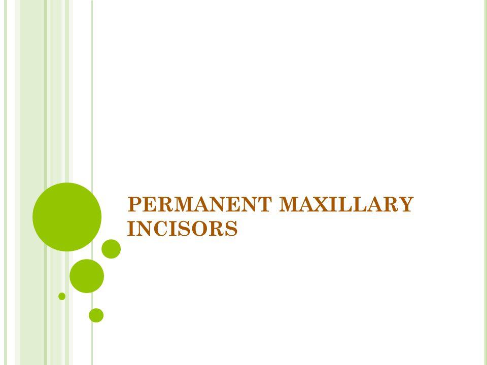 PERMANENT MAXILLARY INCISORS