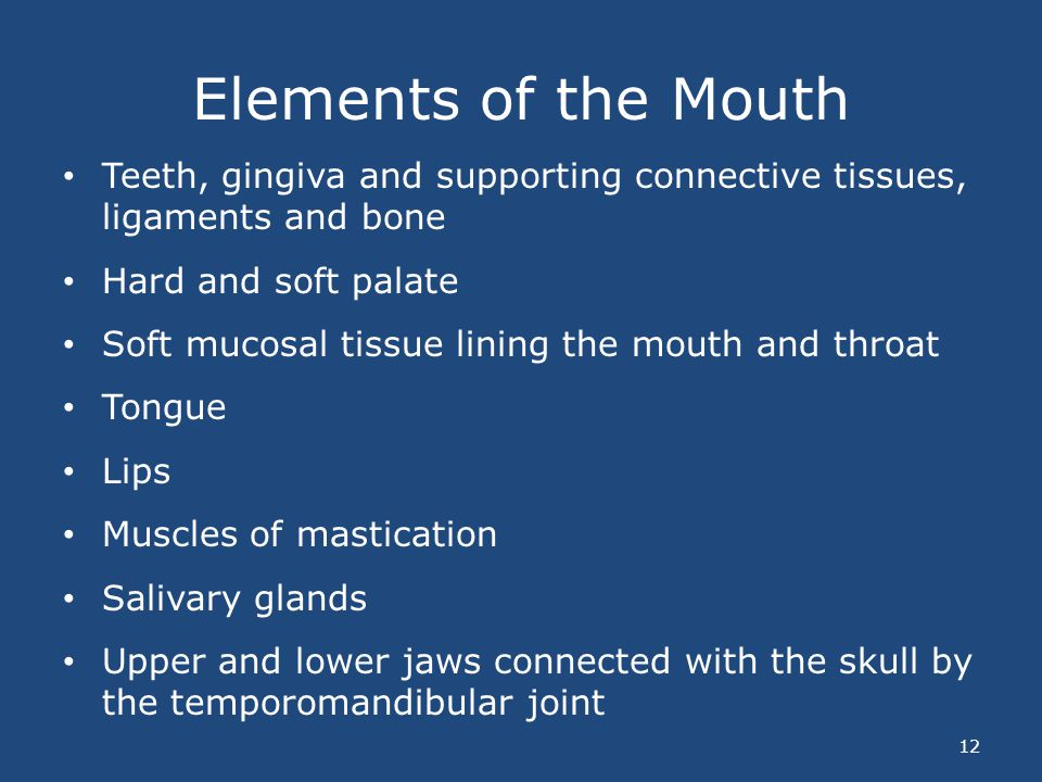 Elements of the Mouth Teeth, gingiva and supporting connective tissues, ligaments and bone Hard and soft palate Soft mucosal tissue lining the mouth a