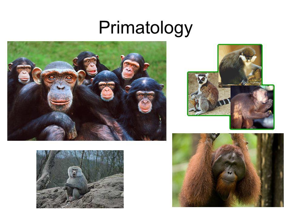 Mammalian Characteristics Fur covering body Endothermy Viviparous Mammary glands Omnivorous -Specialized teeth