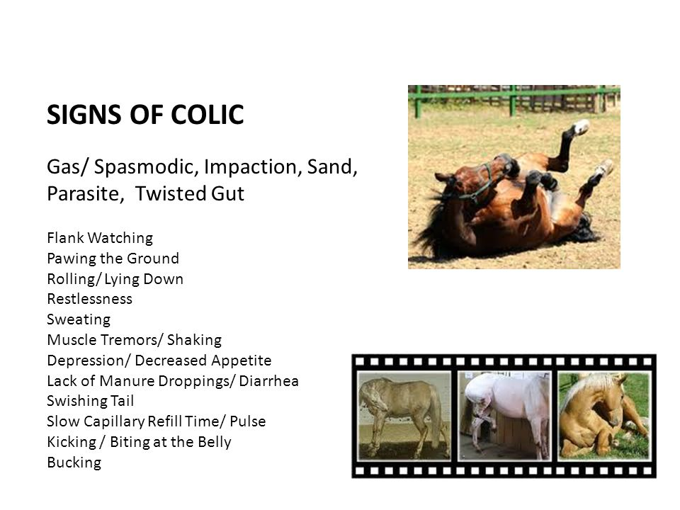 SIGNS OF COLIC Gas/ Spasmodic, Impaction, Sand, Parasite, Twisted Gut Flank Watching Pawing the Ground Rolling/ Lying Down Restlessness Sweating Muscl