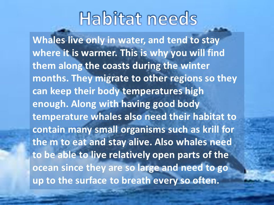 Whales live only in water, and tend to stay where it is warmer. This is why you will find them along the coasts during the winter months. They migrate
