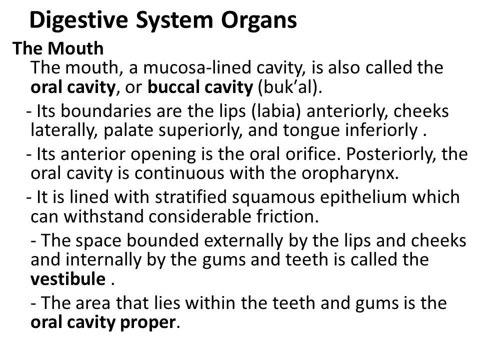 Digestive System Organs The Mouth The mouth, a mucosa-lined cavity, is also called the oral cavity, or buccal cavity (bukal). - Its boundaries are the