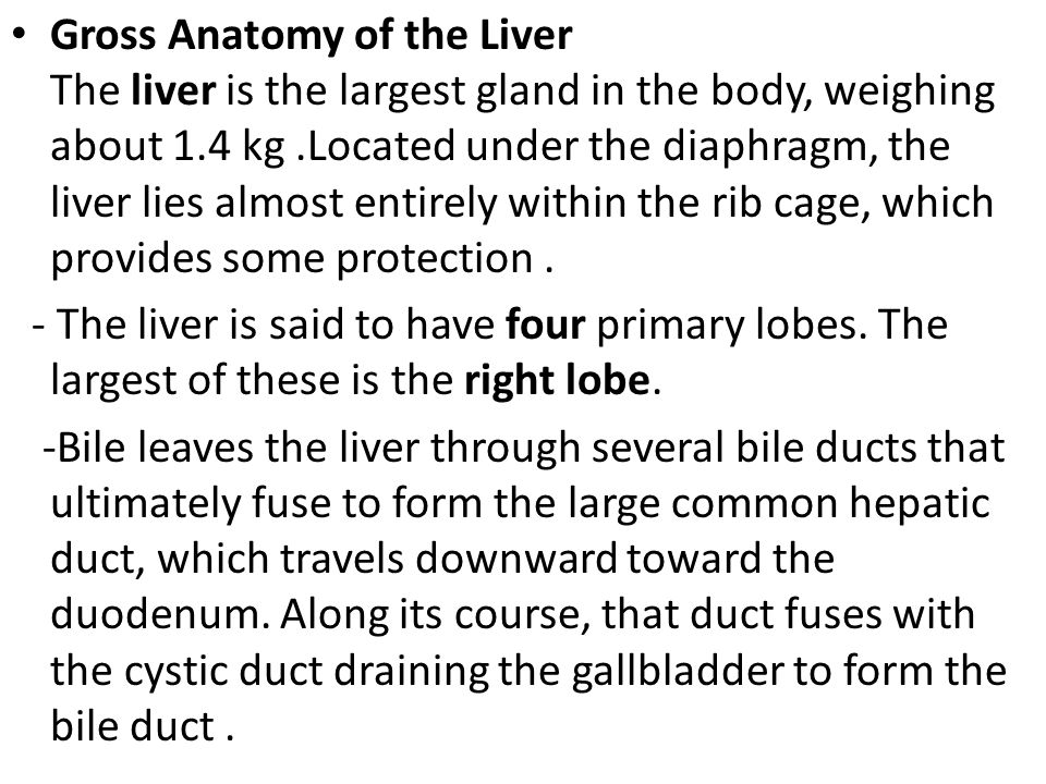 Gross Anatomy of the Liver The liver is the largest gland in the body, weighing about 1.4 kg.Located under the diaphragm, the liver lies almost entire