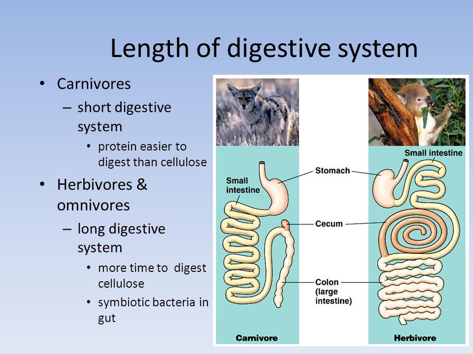 Digestive systems Everybodys got one!