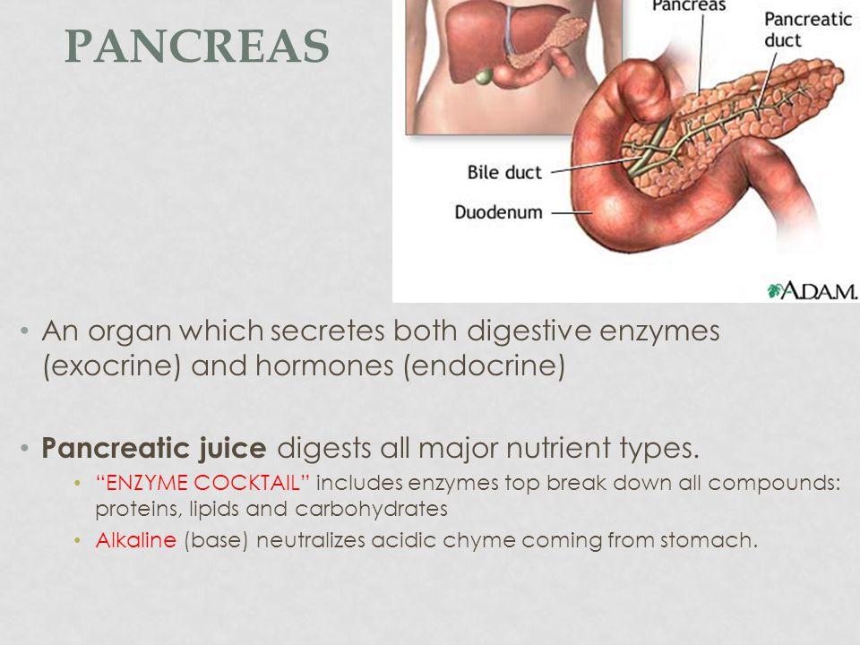 ACCESSORY ORGANS Pancreas Gall Bladder Liver