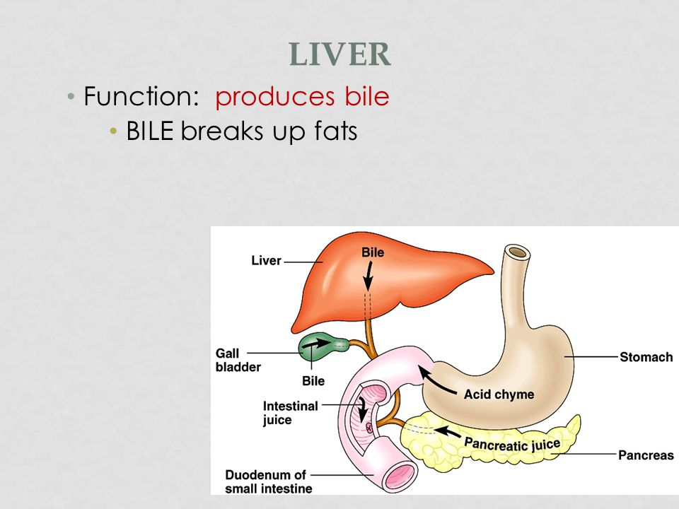 LIVER FUNCTIONS The liver carries on many important metabolic activities, including: Glycogenesis: producing glycogen from glucose Glycolysis: breakdown of glycogen into glucose Gluconeogenesis: converts non-carbohydrates to glucose Oxidizes fatty acids Synthesizes phospholipids and cholesterol Forms urea Synthesizes plasma proteins Stores glycogen, iron, and vitamins A, D, and B 12 Phagocytosis of worn out RBCs and foreign substances Removes toxins such as alcohol and certain drugs from the blood