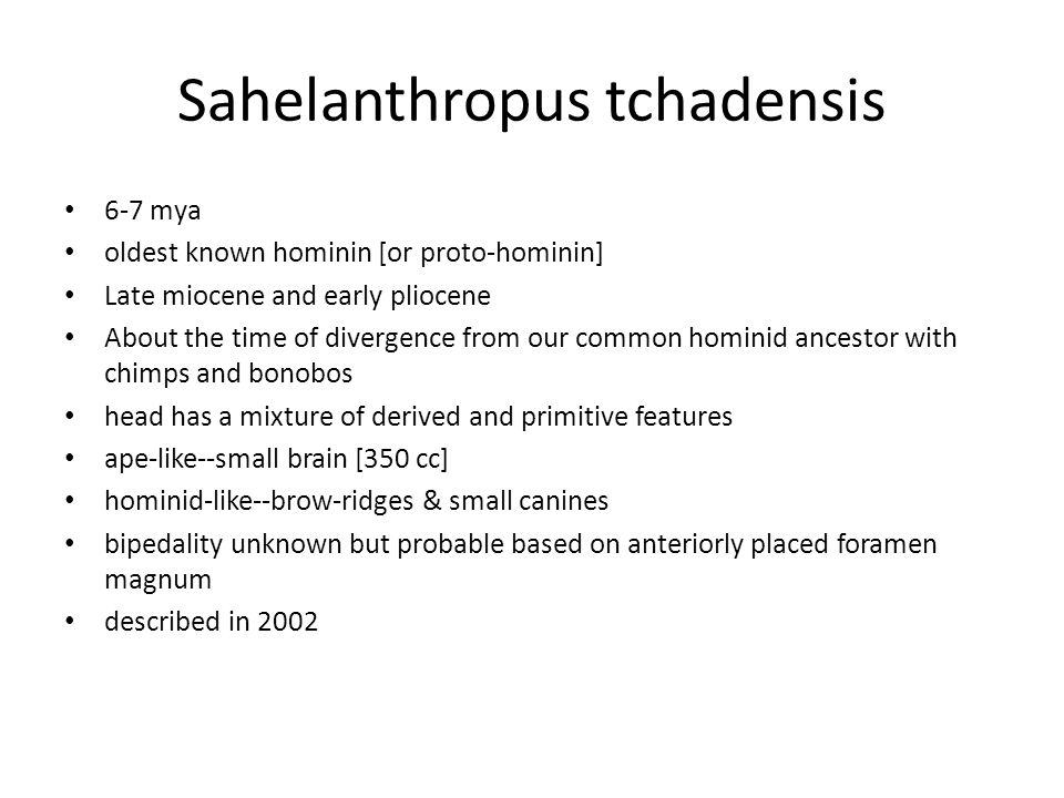 Sahelanthropus tchadensis 6-7 mya oldest known hominin [or proto-hominin] Late miocene and early pliocene About the time of divergence from our common hominid ancestor with chimps and bonobos head has a mixture of derived and primitive features ape-like--small brain [350 cc] hominid-like--brow-ridges & small canines bipedality unknown but probable based on anteriorly placed foramen magnum described in 2002