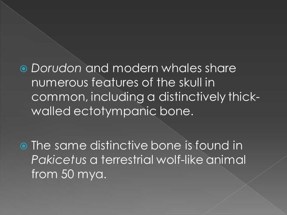 Dorudon and modern whales share numerous features of the skull in common, including a distinctively thick- walled ectotympanic bone. The same distinct