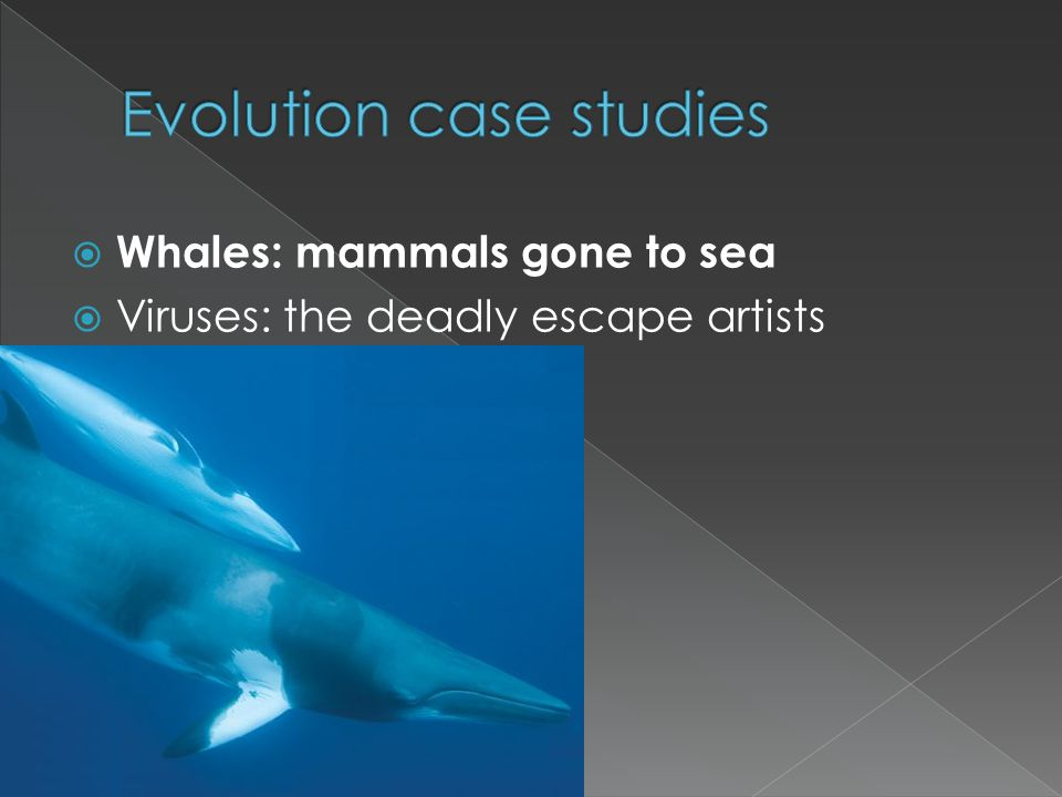 Whales: mammals gone to sea Viruses: the deadly escape artists