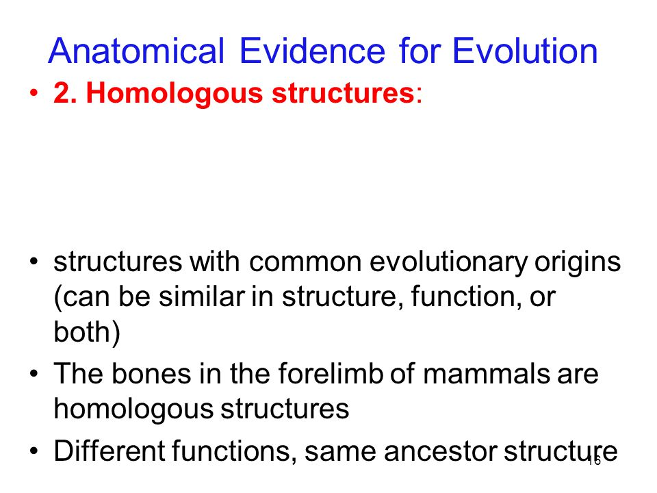 16 Anatomical Evidence for Evolution 2. Homologous structures: structures with common evolutionary origins (can be similar in structure, function, or