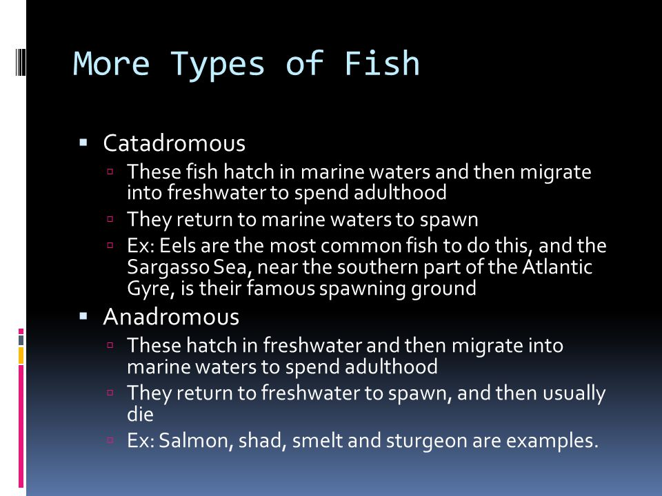 More Types of Fish Catadromous These fish hatch in marine waters and then migrate into freshwater to spend adulthood They return to marine waters to s