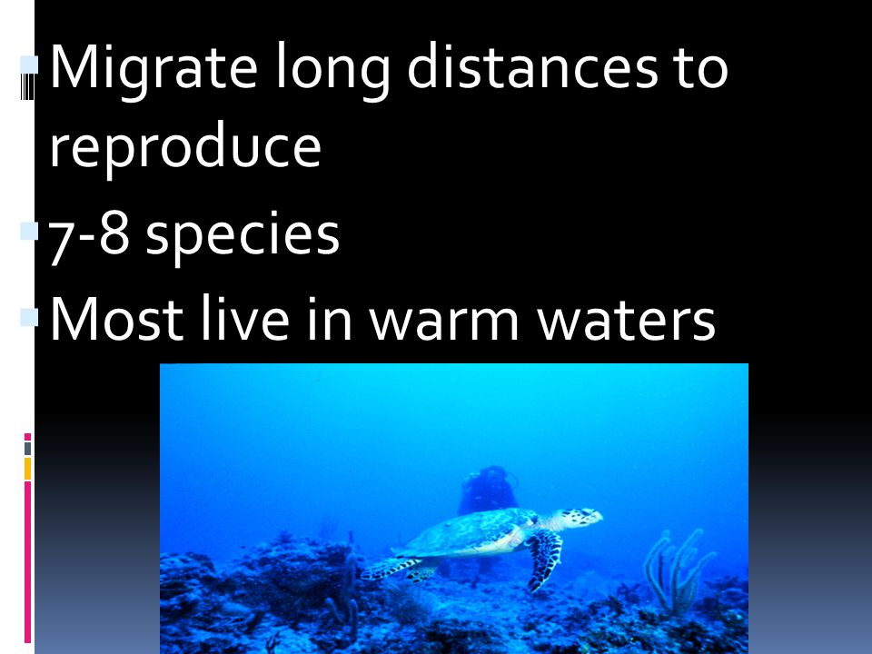 Migrate long distances to reproduce 7-8 species Most live in warm waters