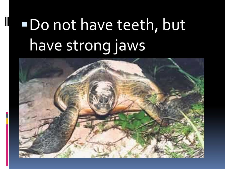 Do not have teeth, but have strong jaws