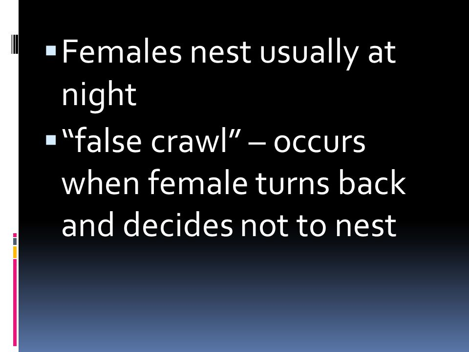 Females nest usually at night false crawl – occurs when female turns back and decides not to nest
