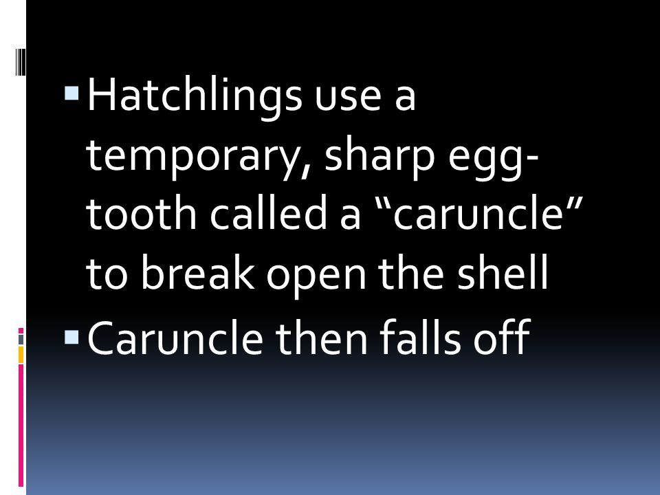 Hatchlings use a temporary, sharp egg- tooth called a caruncle to break open the shell Caruncle then falls off