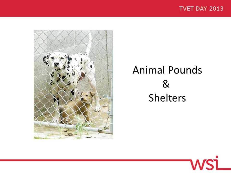 Animal Pounds & Shelters