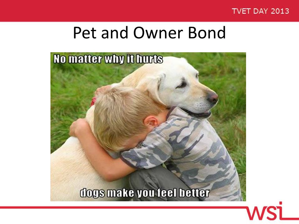 Pet and Owner Bond