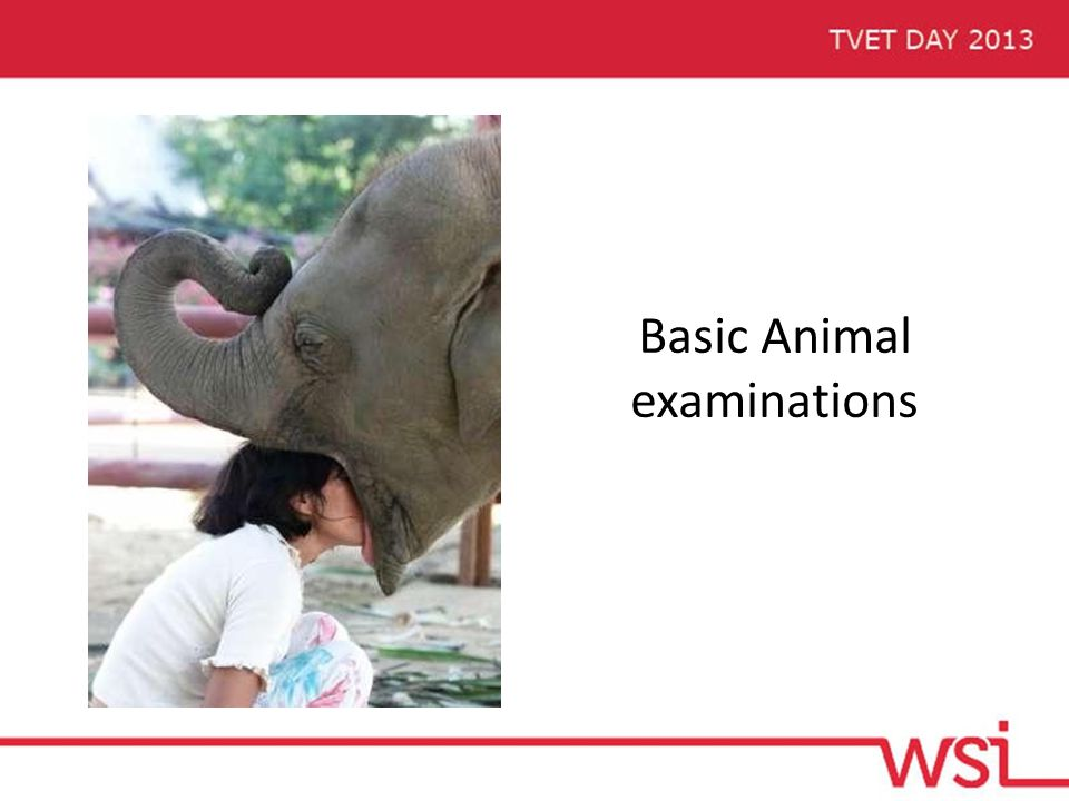Basic Animal examinations