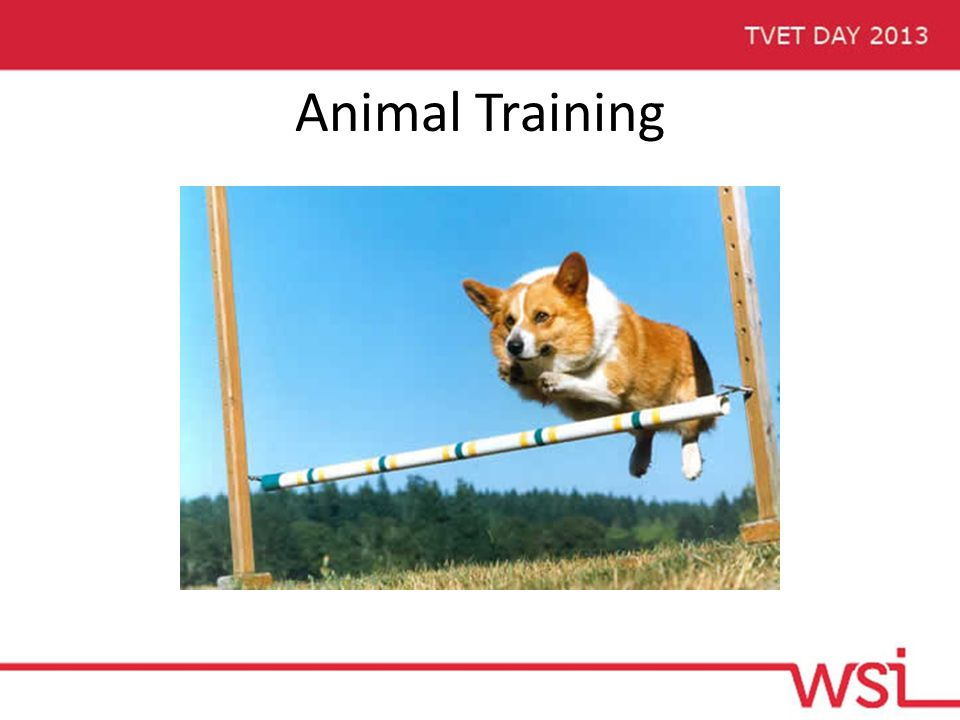 Animal Training