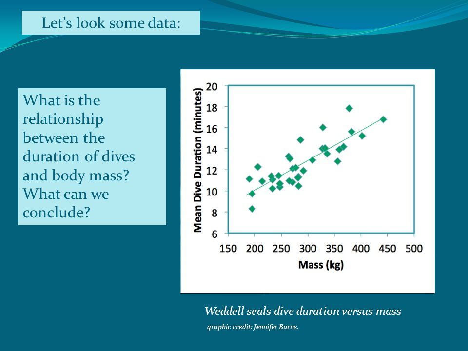 Lets look some data: What is the relationship between the duration of dives and body mass.
