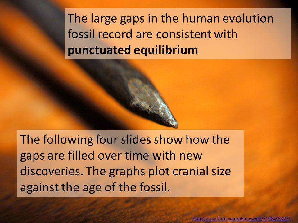 http://www.flickr.com/photos/prfr/3196435827/ The large gaps in the human evolution fossil record are consistent with punctuated equilibrium The follo