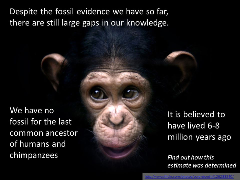 Despite the fossil evidence we have so far, there are still large gaps in our knowledge. We have no fossil for the last common ancestor of humans and